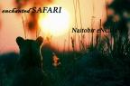 Enchanted Safari
